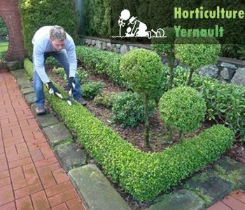 Horticulture Yernault - Haies
